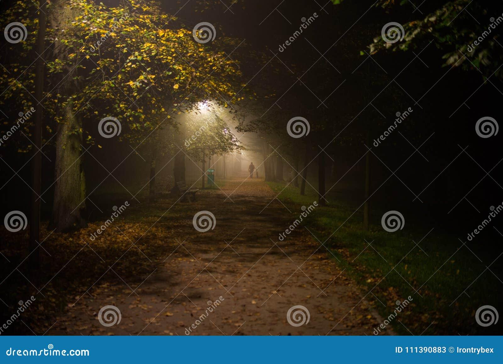 Fog в парке, ноче, мягком фокусе, высоком iso,