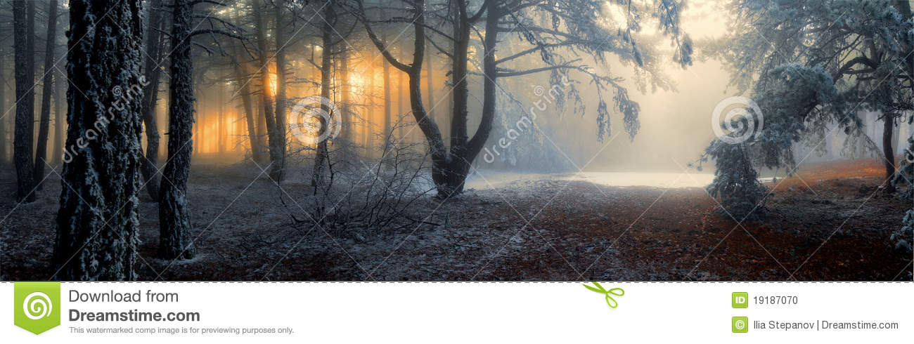 Download Fog in the forest stock photo. Image of dream, line, environment - 19187070
