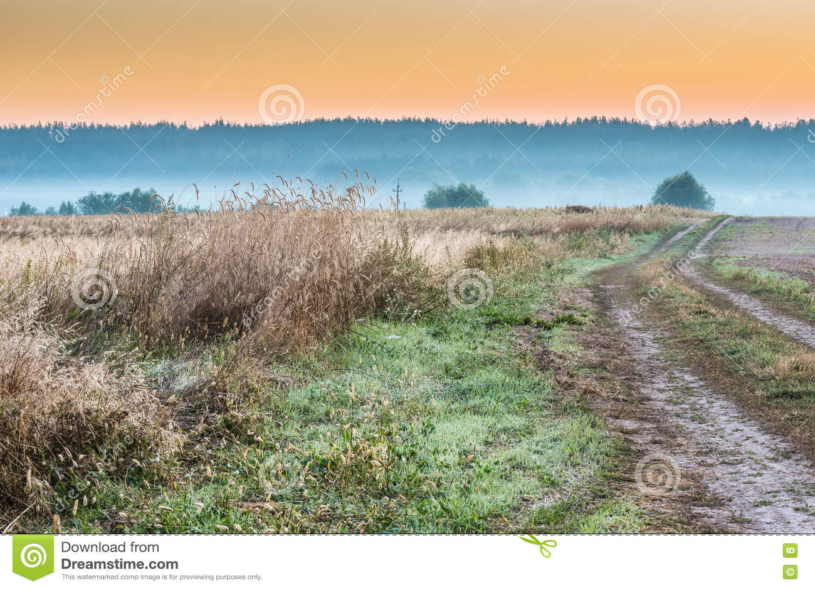 Foggy morning in a field.