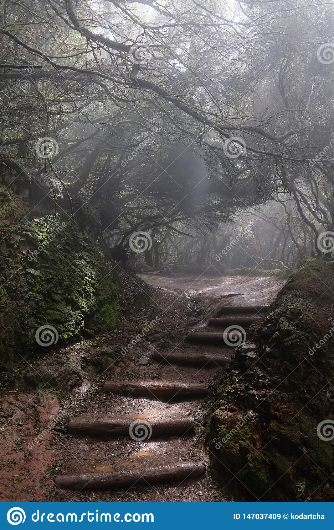 Foggy path in the wet forest