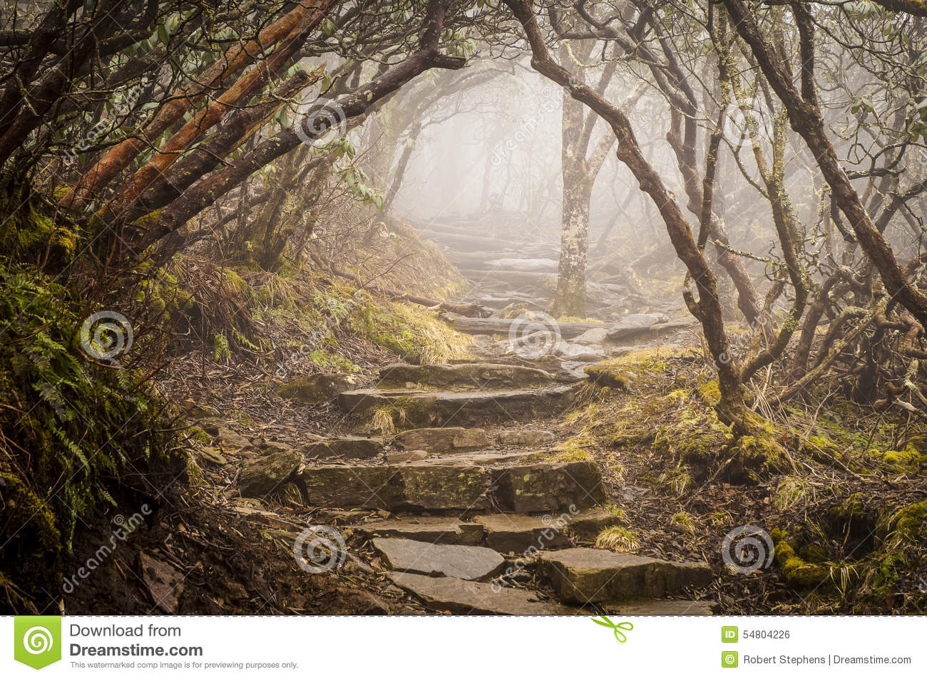 Foggy Spooky Mystical Rhododendron Trail Blue Ridge Parkway NC