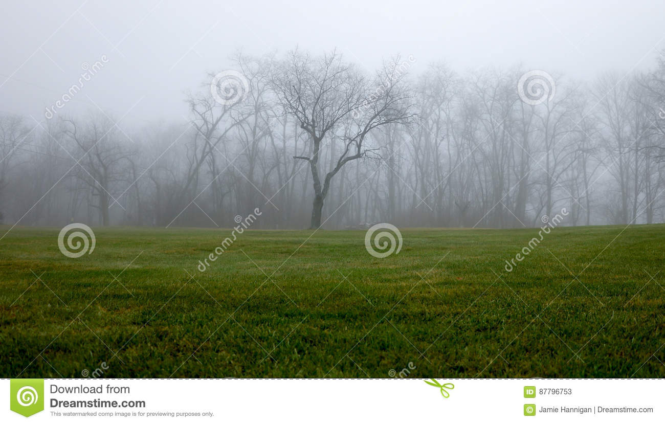 Foggy Tree Line