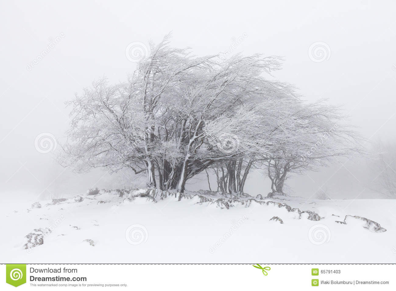 Foggy winter landscape in the forest
