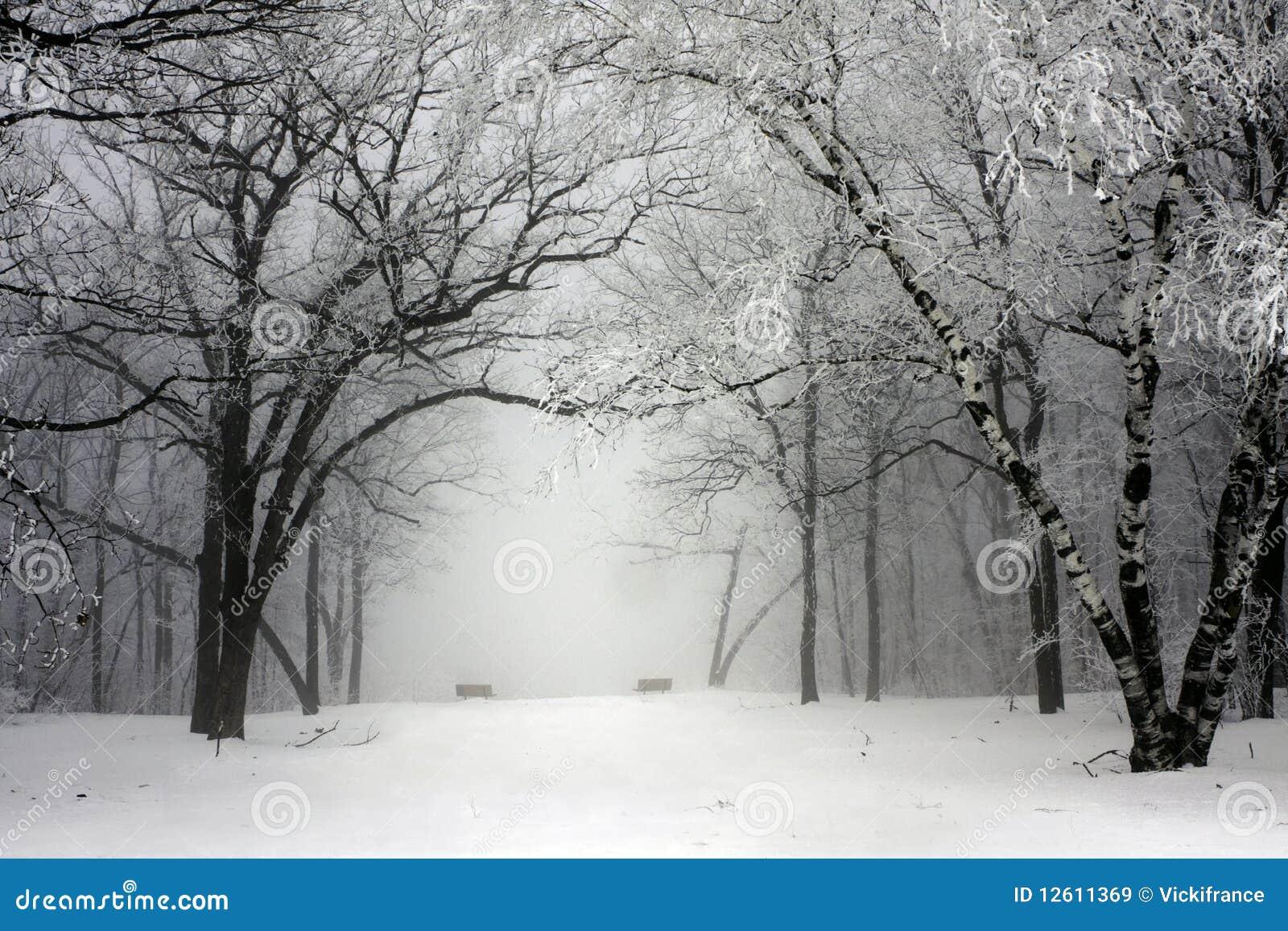 Foggy winter park
