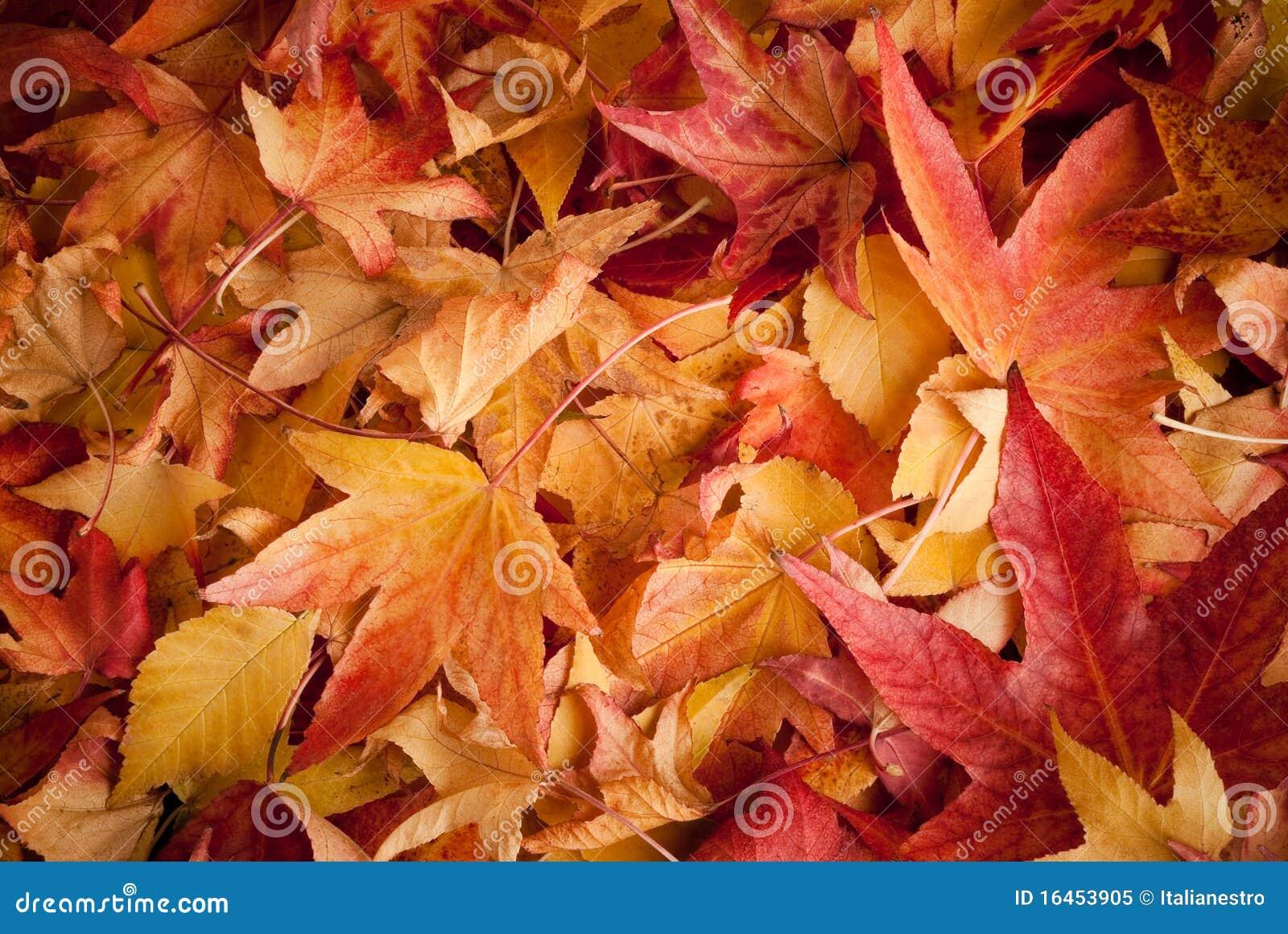 Fogli in autunno