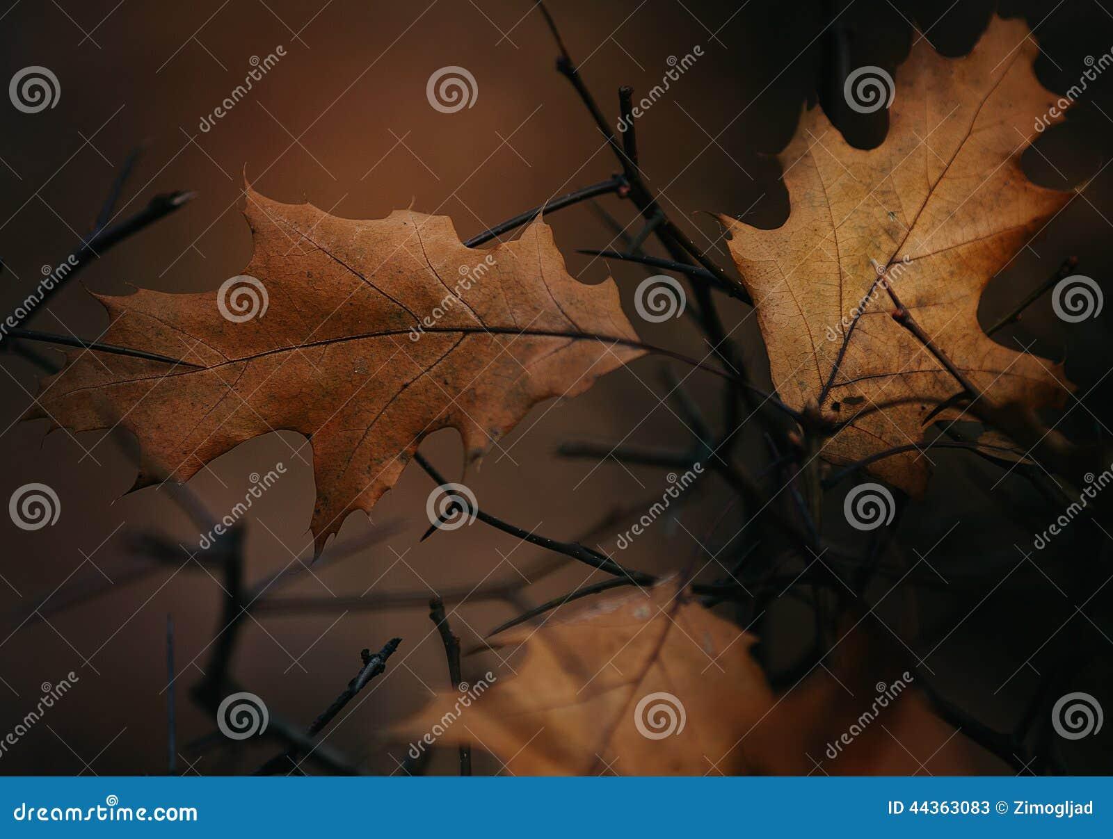Fogli della quercia