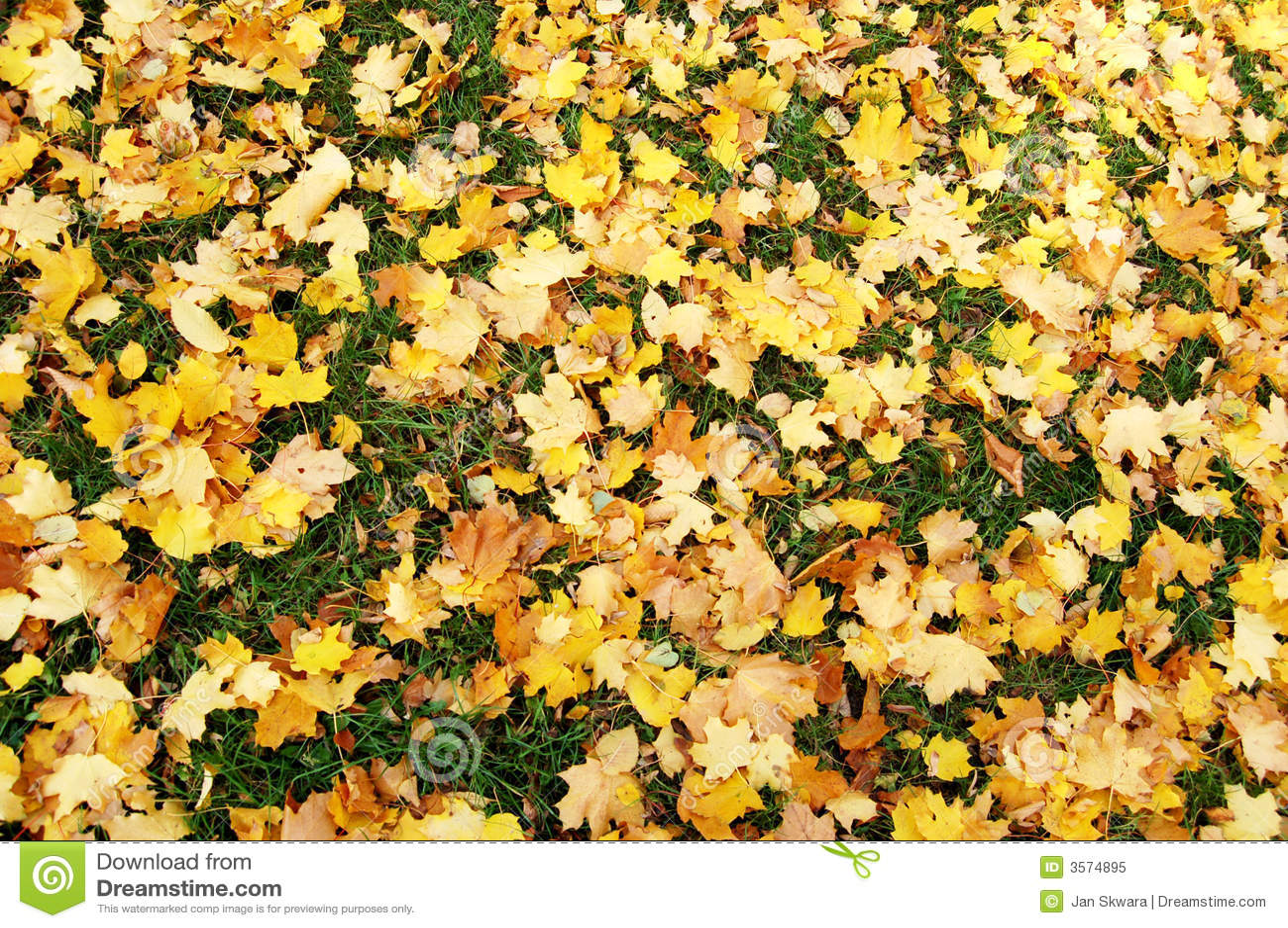 Fogli di autunno caduti