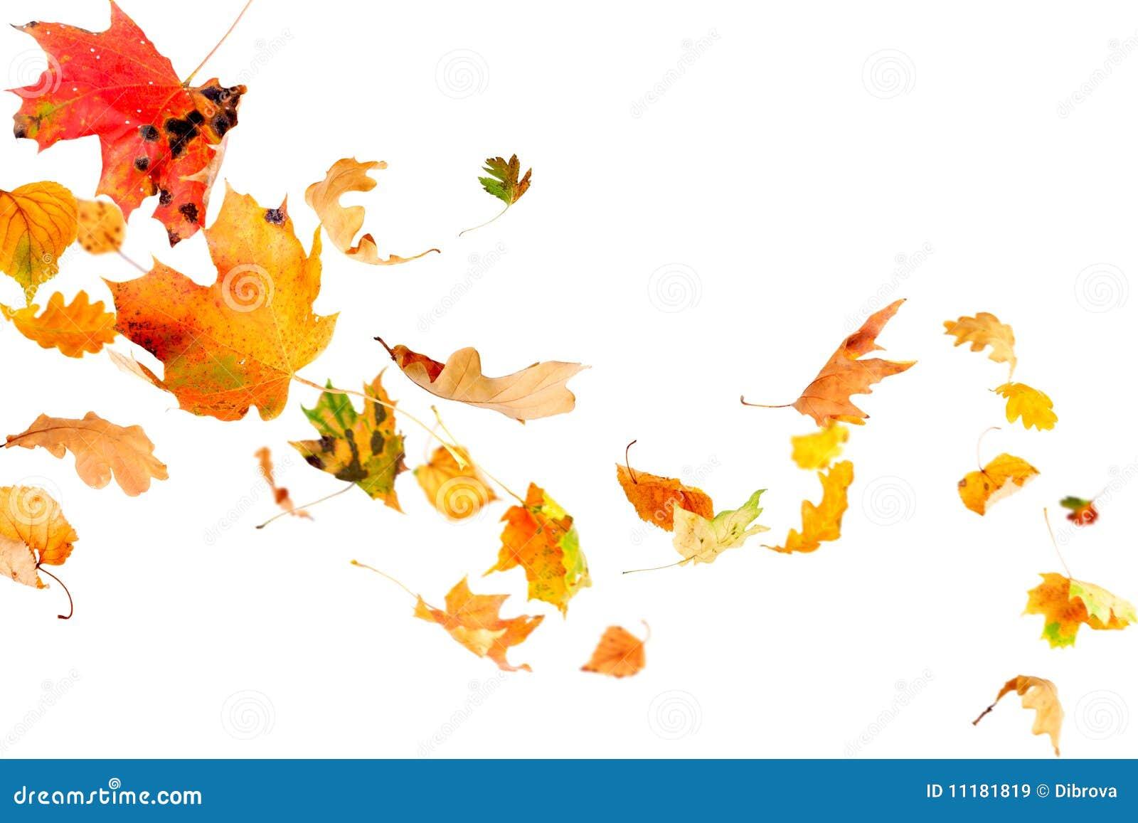 Fogli di autunno di caduta