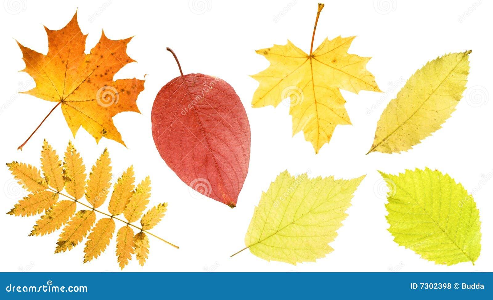Fogli di autunno impostati