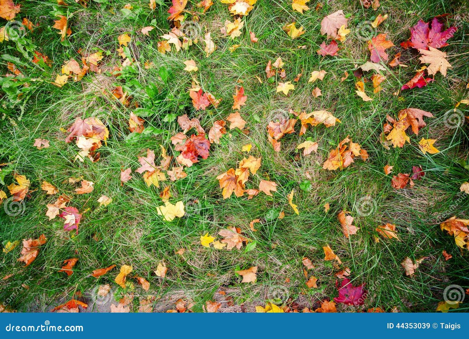 Fogli di autunno su erba verde