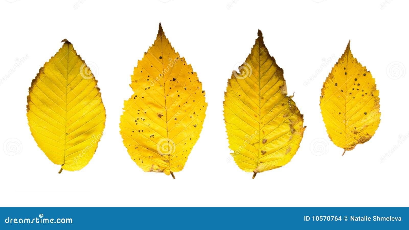 Fogli di colore giallo fotografia stock immagine di - Caduta fogli di colore stampabili ...