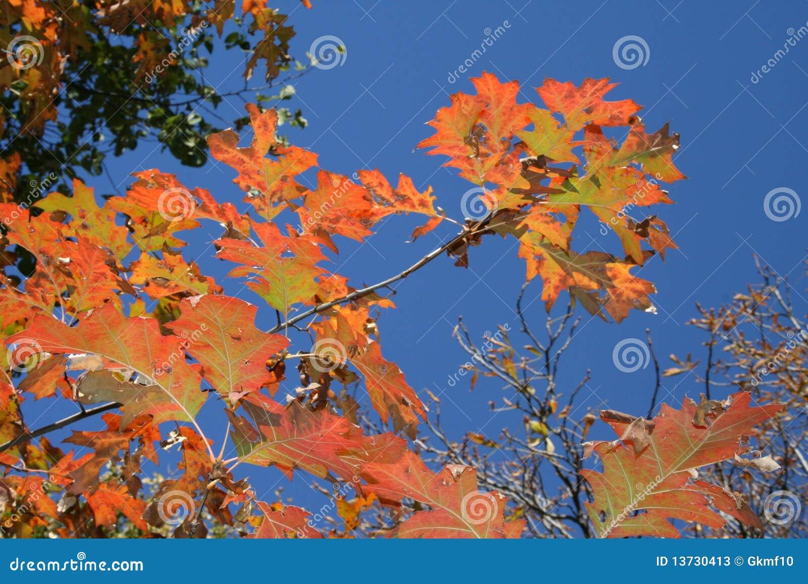 Fogli di colore giallo fotografie stock immagine 13730413 - Caduta fogli di colore stampabili ...