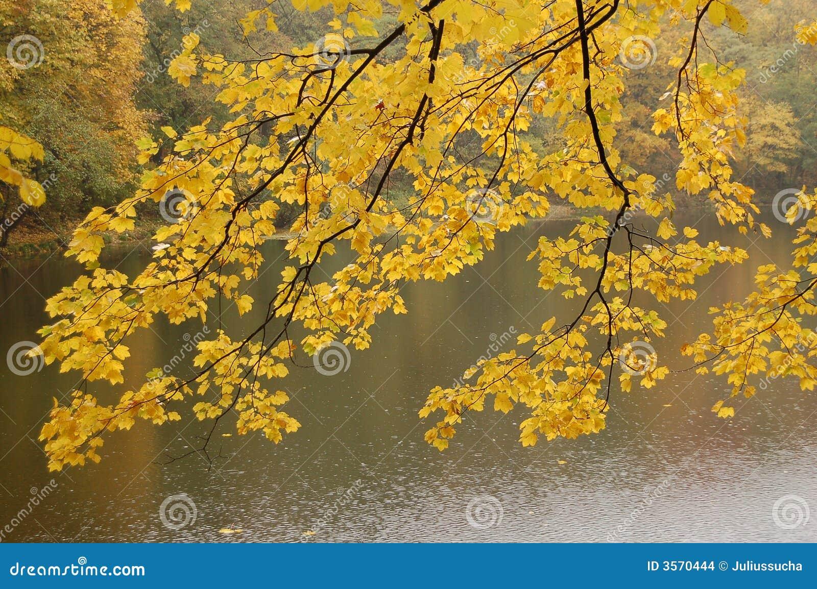 Fogli di colore giallo sopra il lago