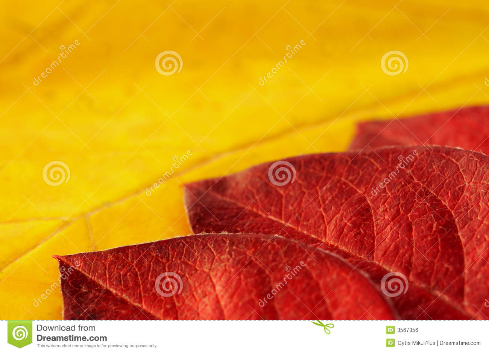 Fogli variopinti di autunno