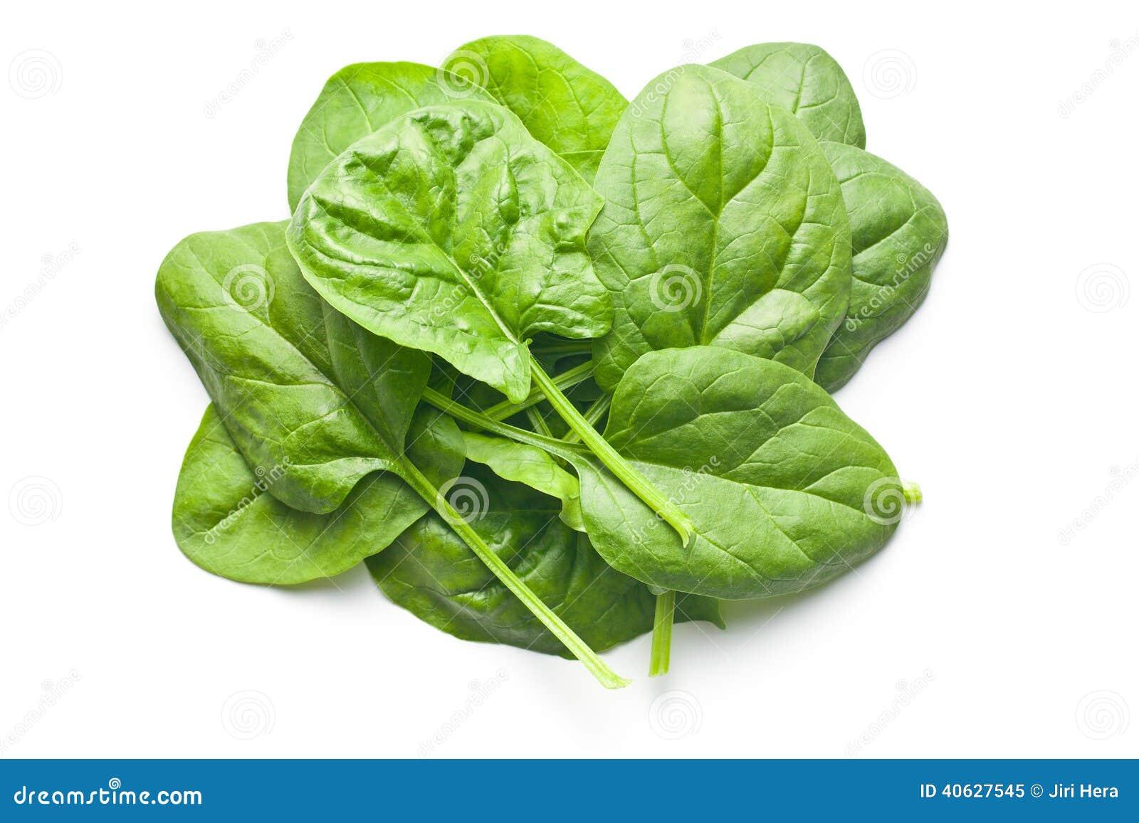 Fogli verdi degli spinaci