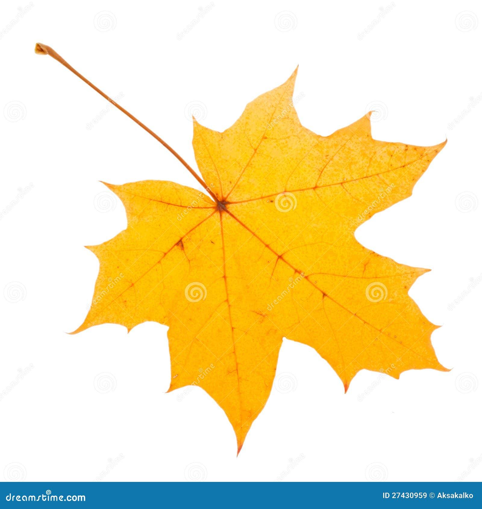 Foglia di acero gialla come simbolo di autunno immagine - Foglia canadese contorno foglia canadese ...
