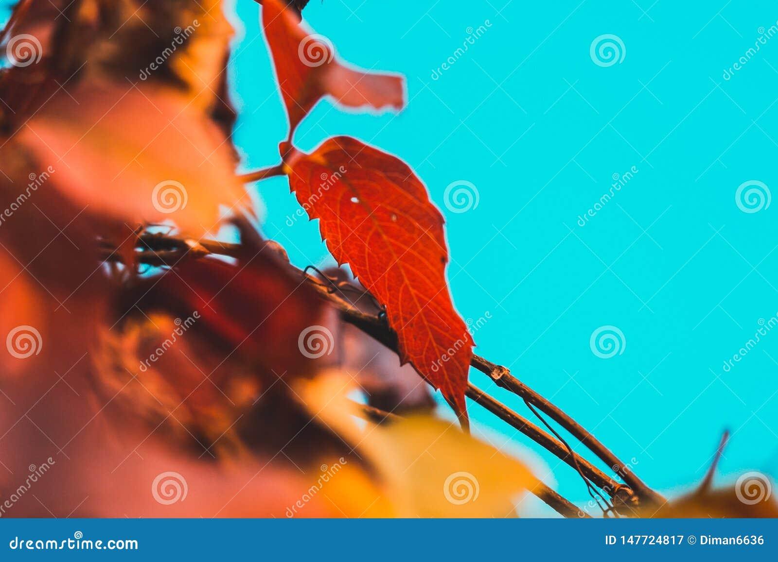 Foglia di autunno su un ramo su un fondo del cielo