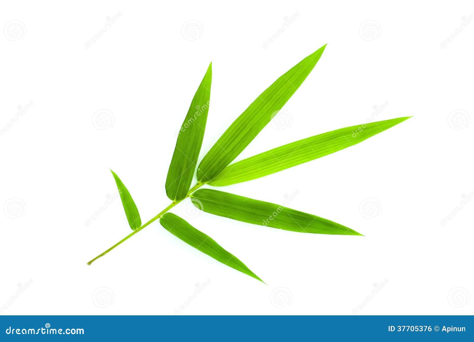 La Foglia Di Bamb.Foglia Di Bambu Fotografia Stock Immagine Di Flora