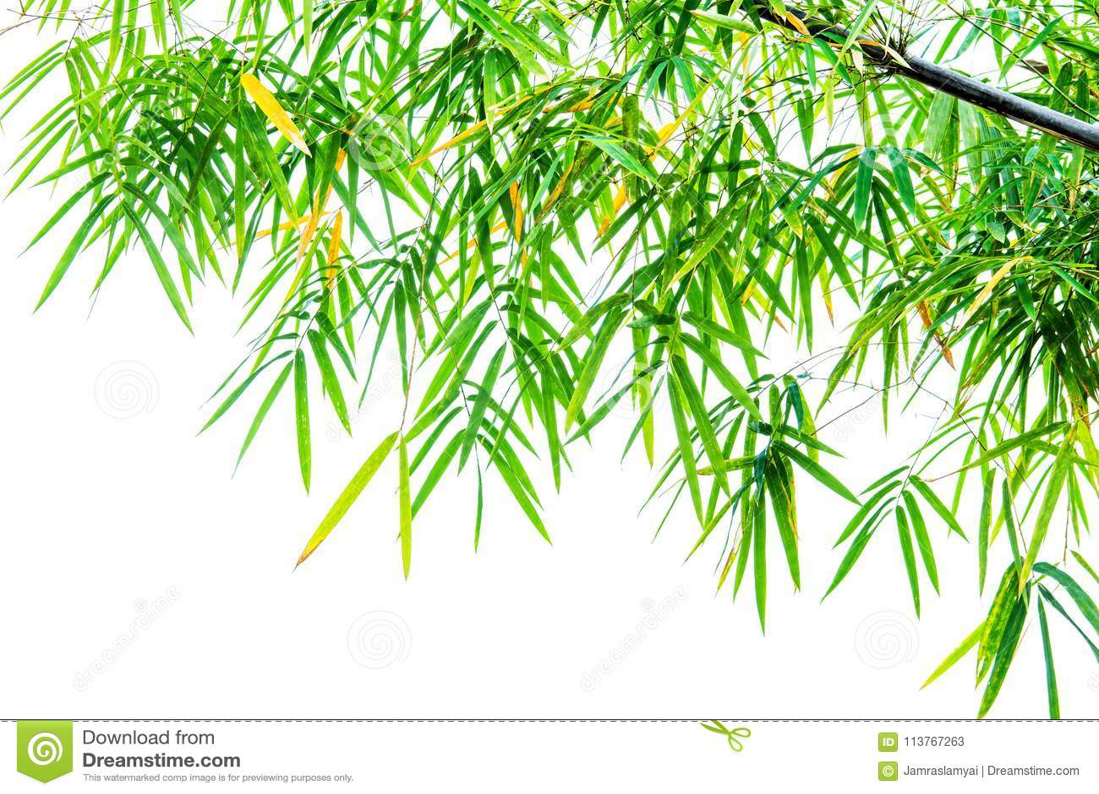 Foglia Di Bamb.Foglia Di Bambu Verde Su Bianco Immagine Stock Immagine Di