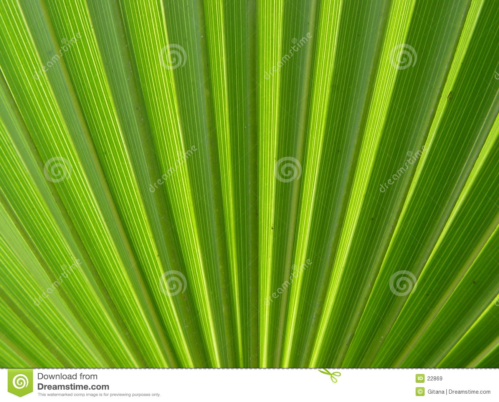 Foglia di palma
