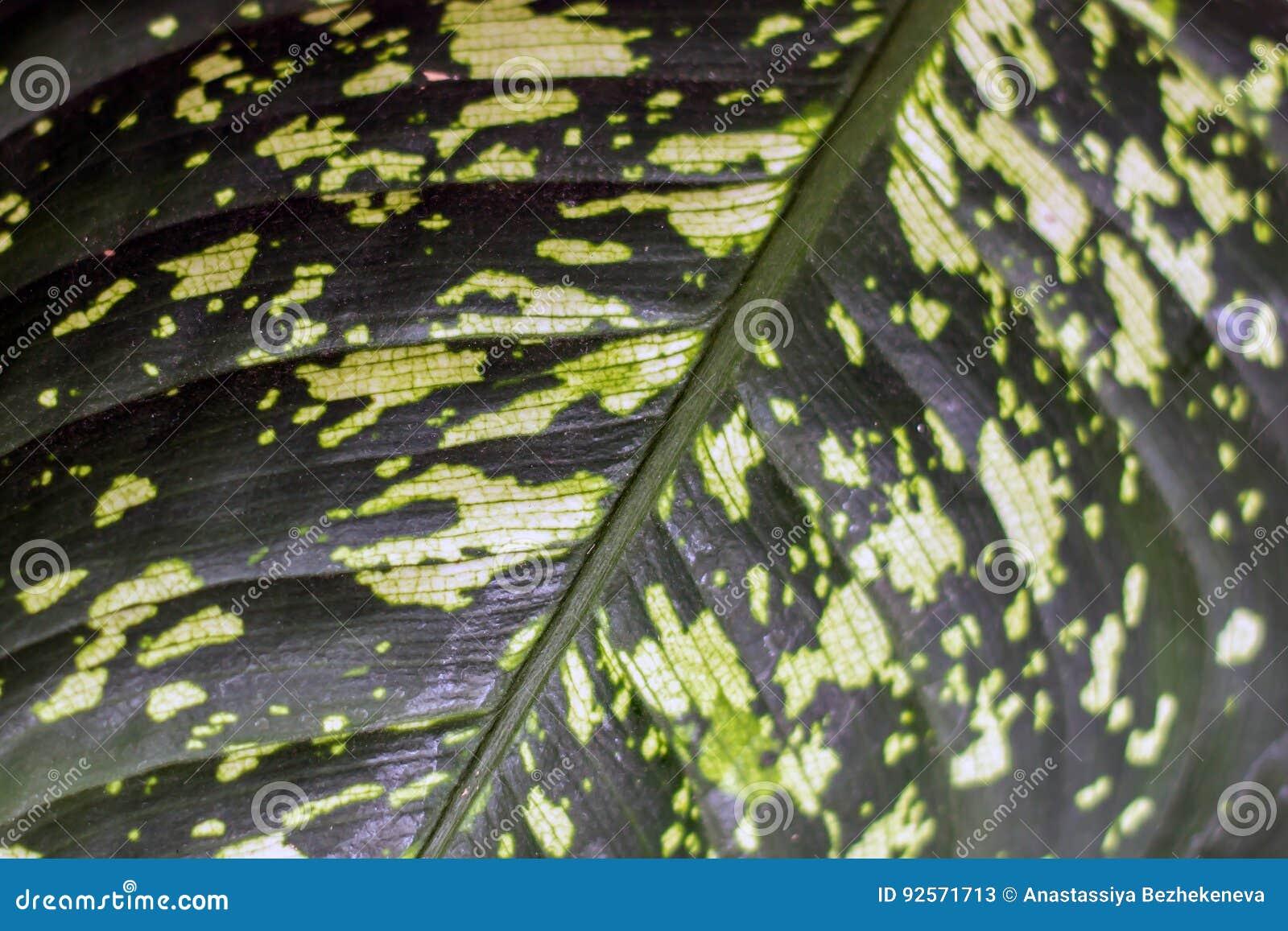 Foglia verde del fondo della pianta