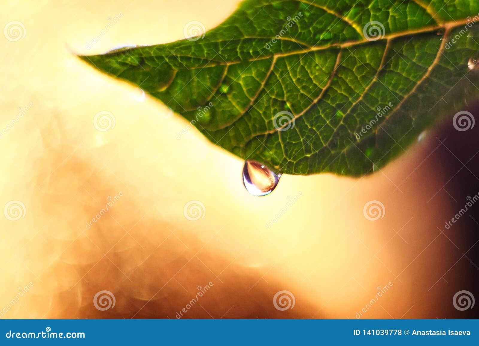 Foglia verde fresca con il grande macro fondo del bokeh e di goccia