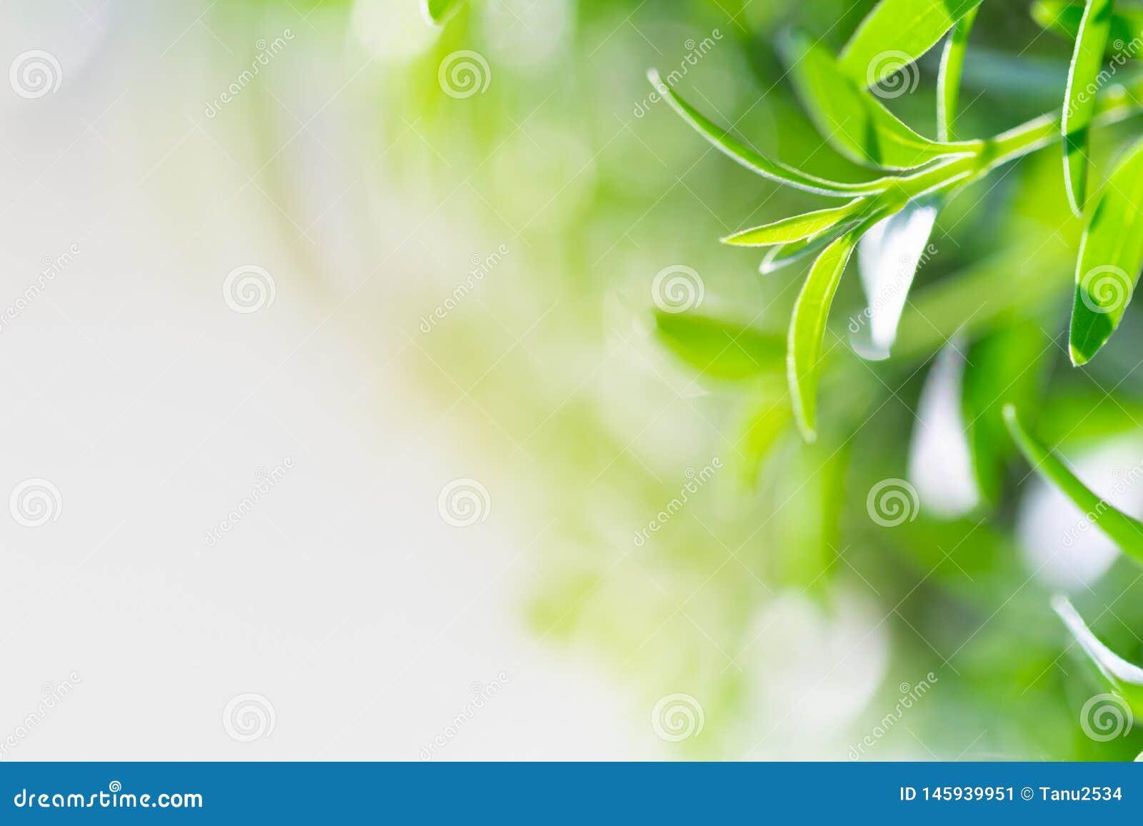 Foglia verde sul fondo vago della pianta Bella struttura della foglia in natura