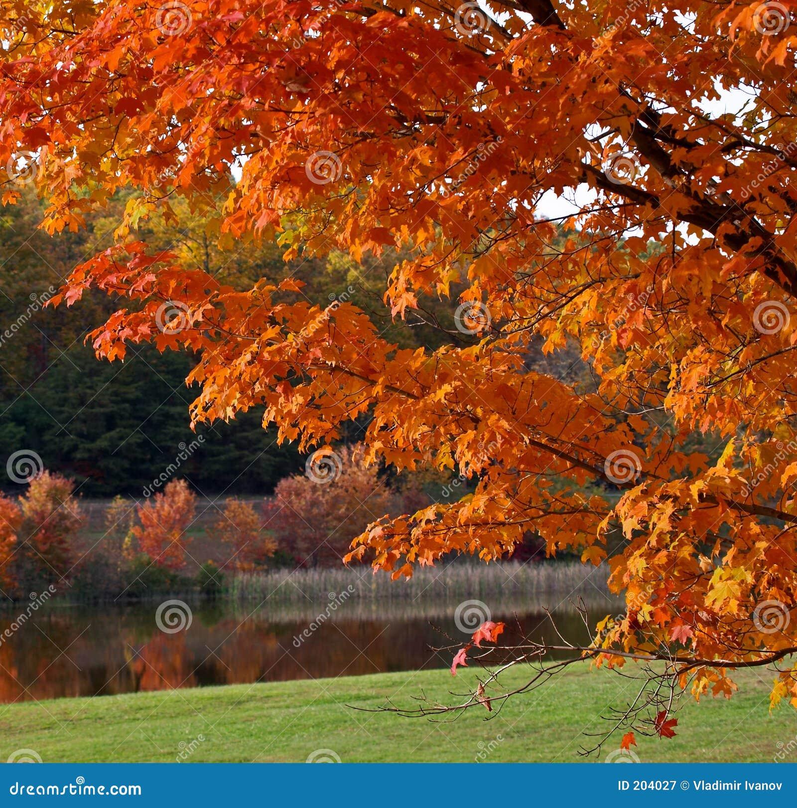 Fogliame di autunno