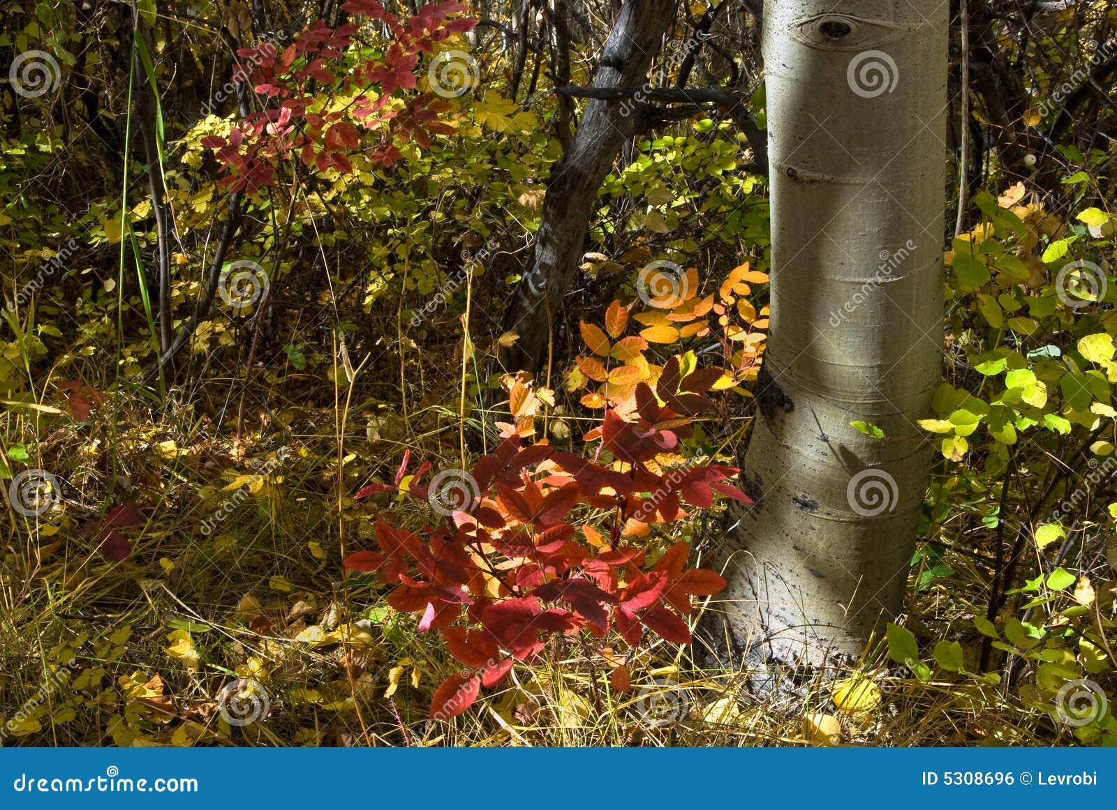 Download Fogliame di autunno fotografia stock. Immagine di montana - 5308696