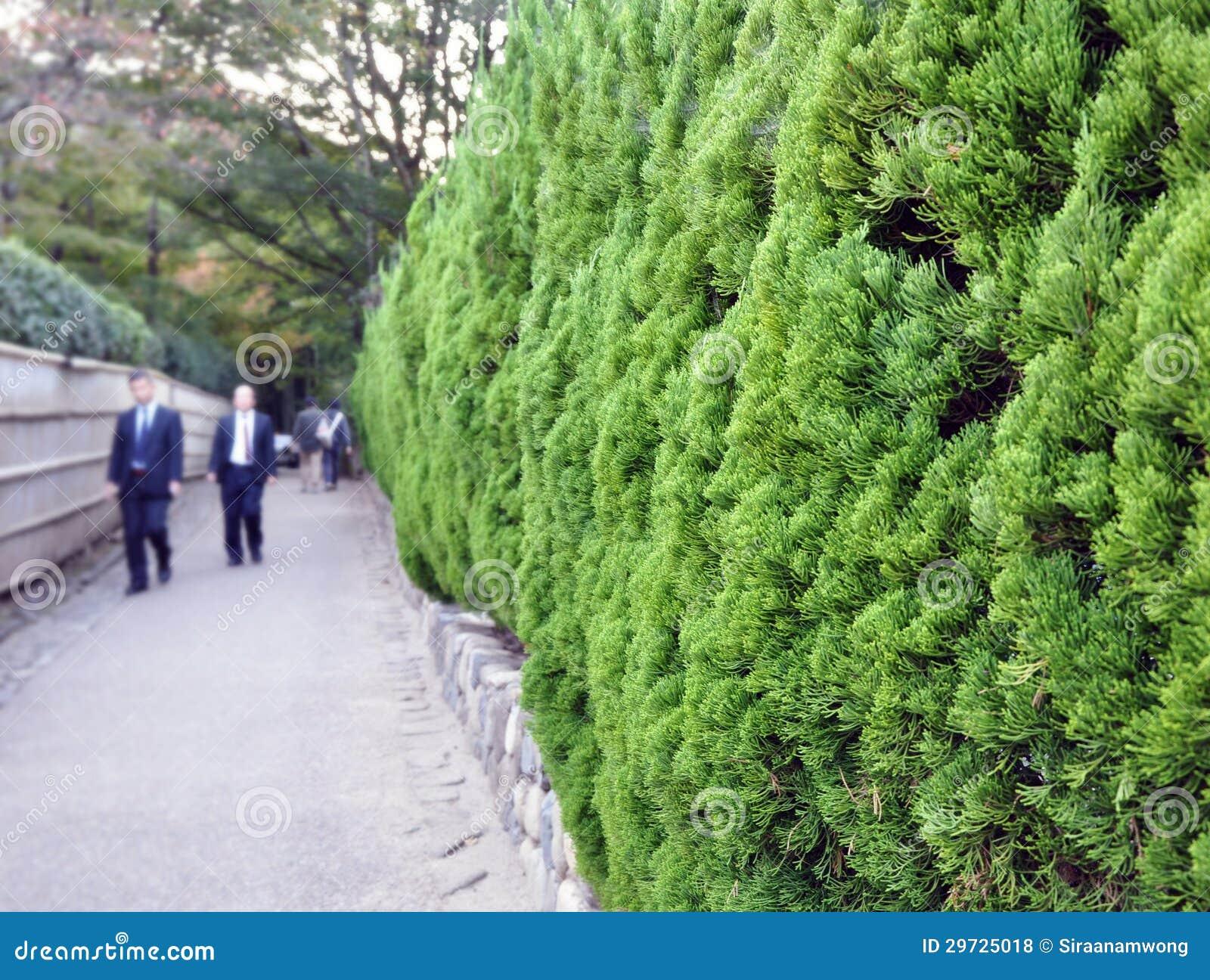 Fogliame sempreverde in giardino giapponese fotografie - Sempreverde da giardino ...