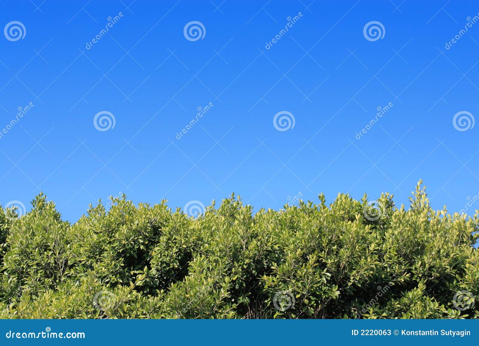 Fogliame verde sotto cielo blu