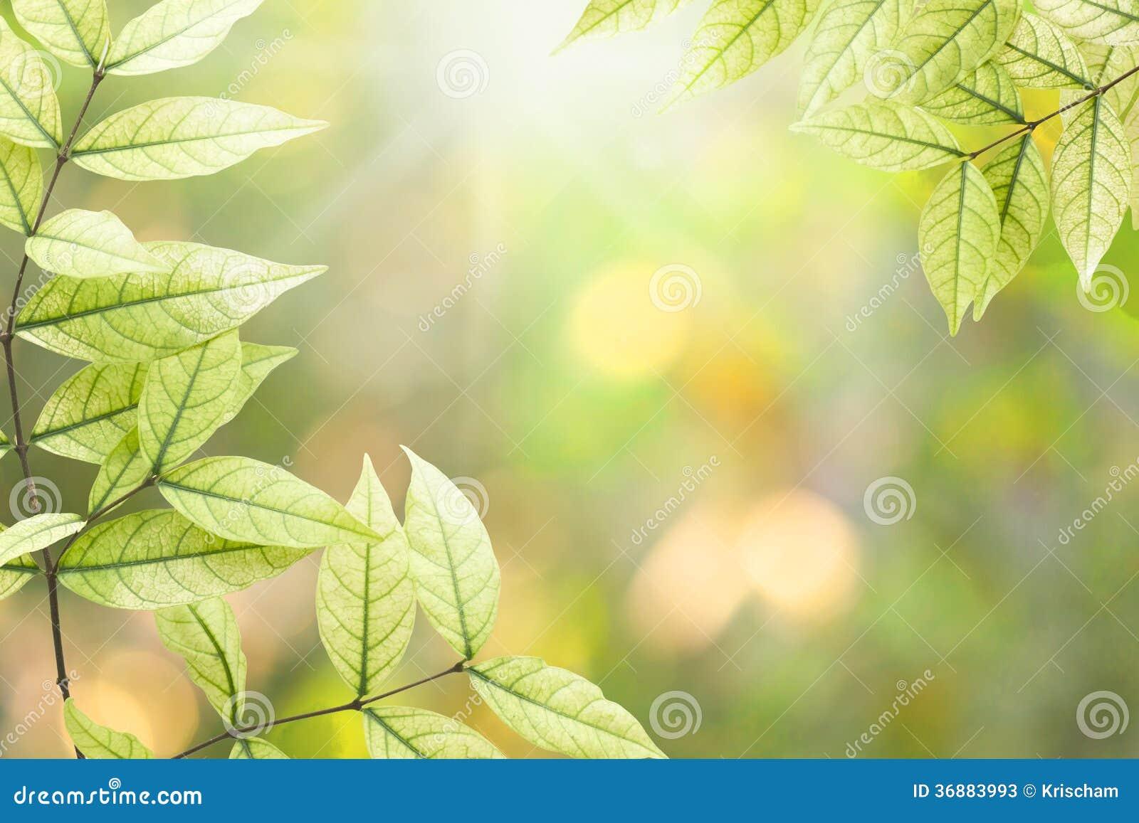 Download Foglie immagine stock. Immagine di estate, giardino, fogliame - 36883993