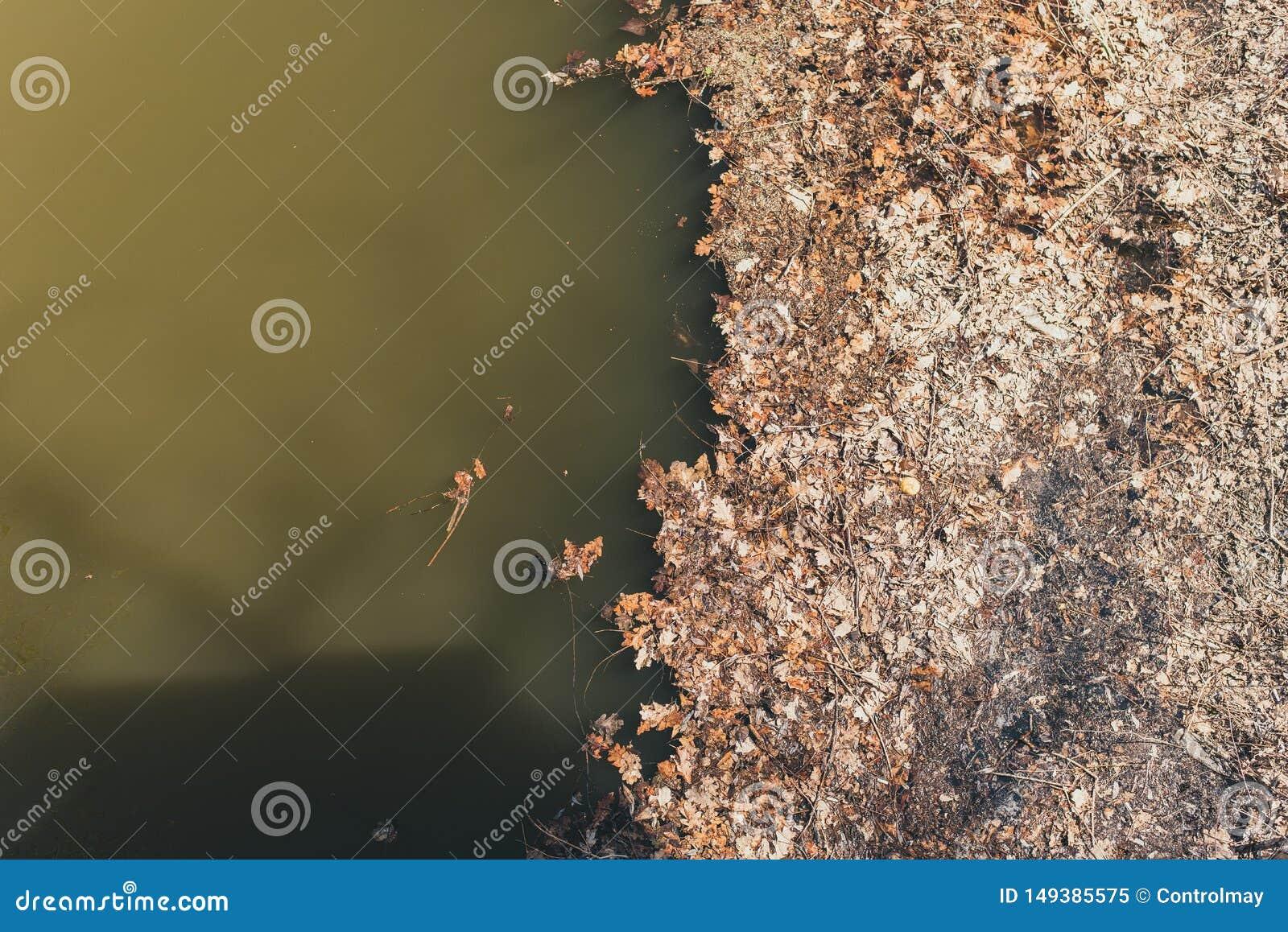 Foglie asciutte vicino all acqua appassito e caduto va dal fiume fangoso Problemi ambientali