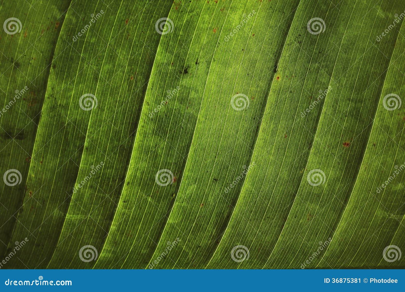 Download Foglie della banana immagine stock. Immagine di colore - 36875381