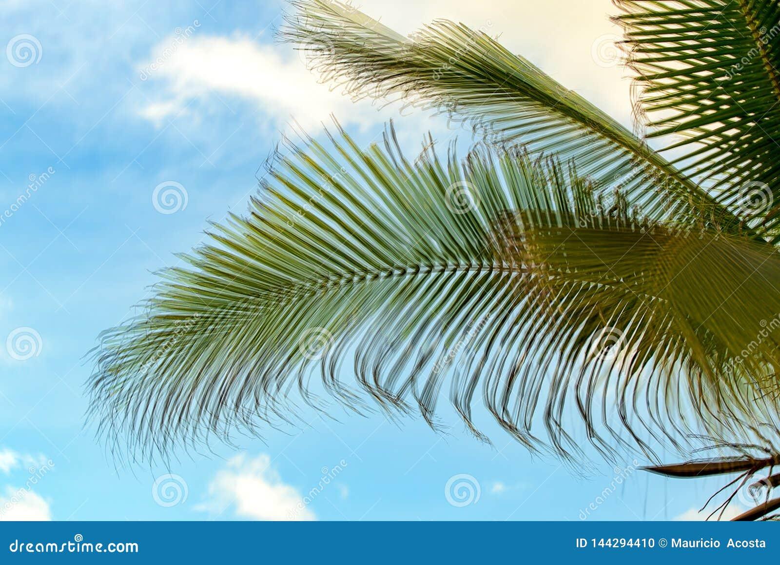 Foglie della palma contro il cielo blu