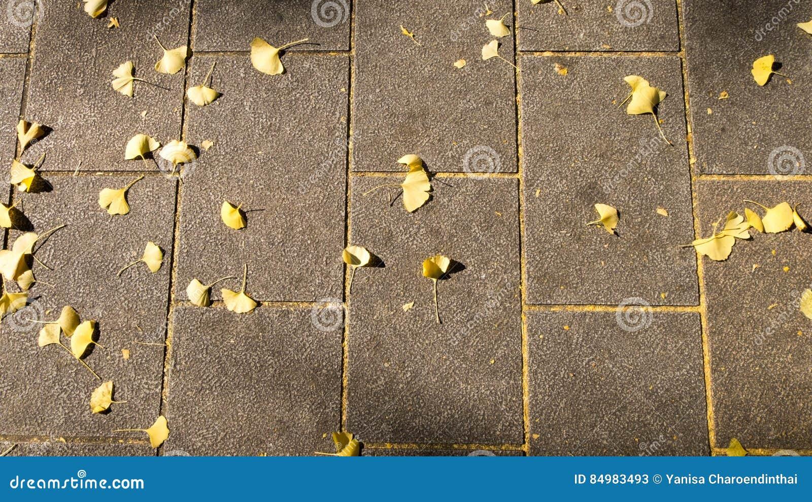 Foglie della pavimentazione in piastrelle e di gingo del mattone
