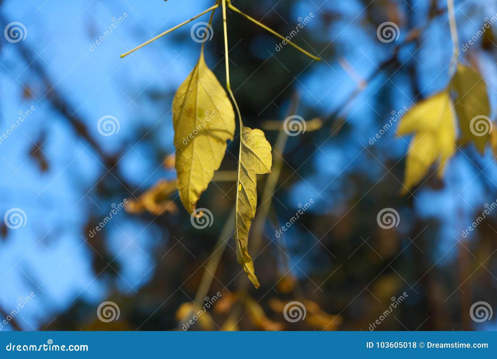 Foglie di autunno dopo pioggia