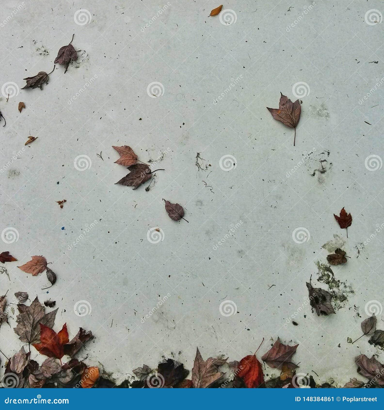 Foglie di autunno sulla parete