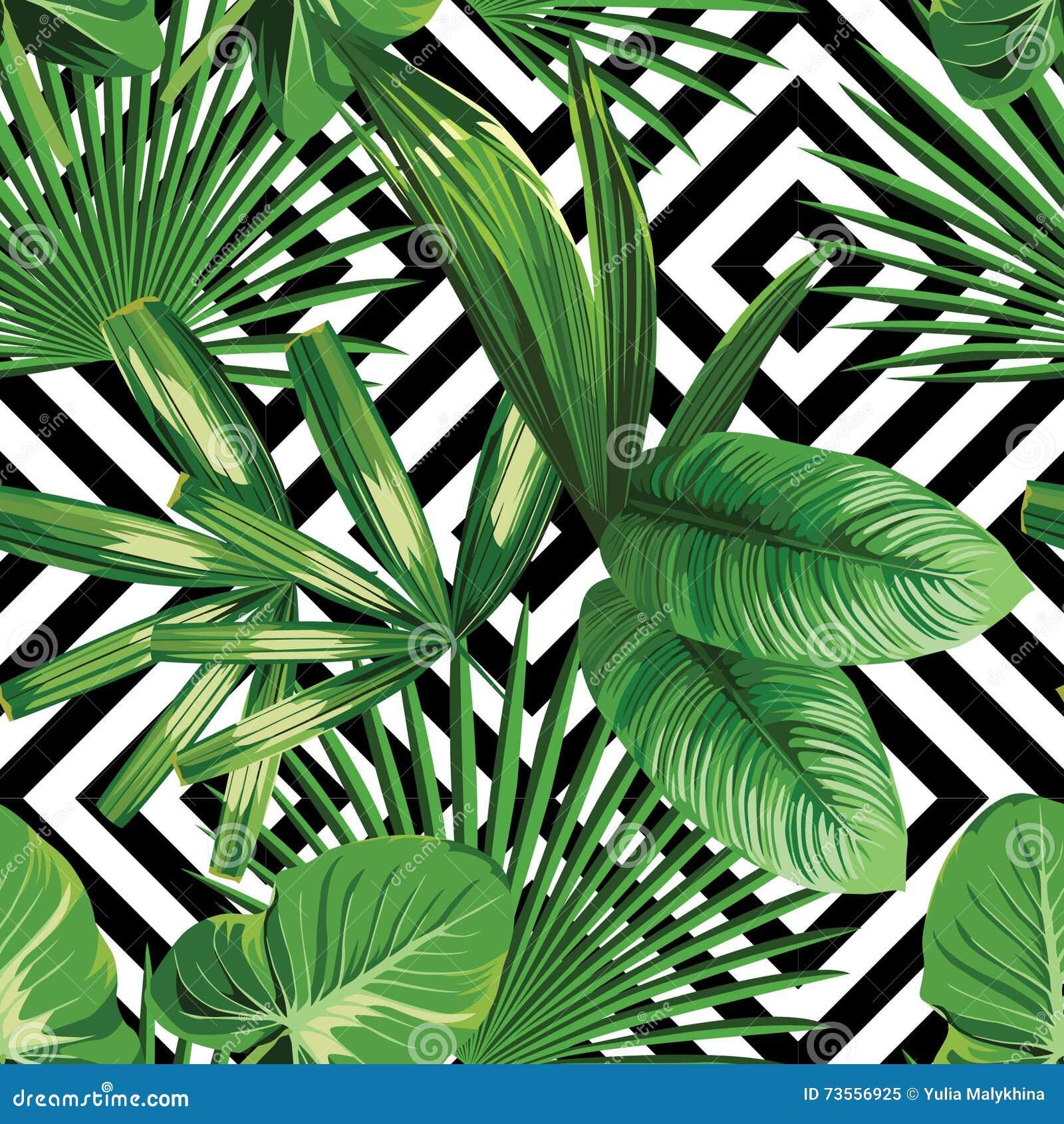 Foglie di palma tropicali della pianta esotica della for Pianta palma