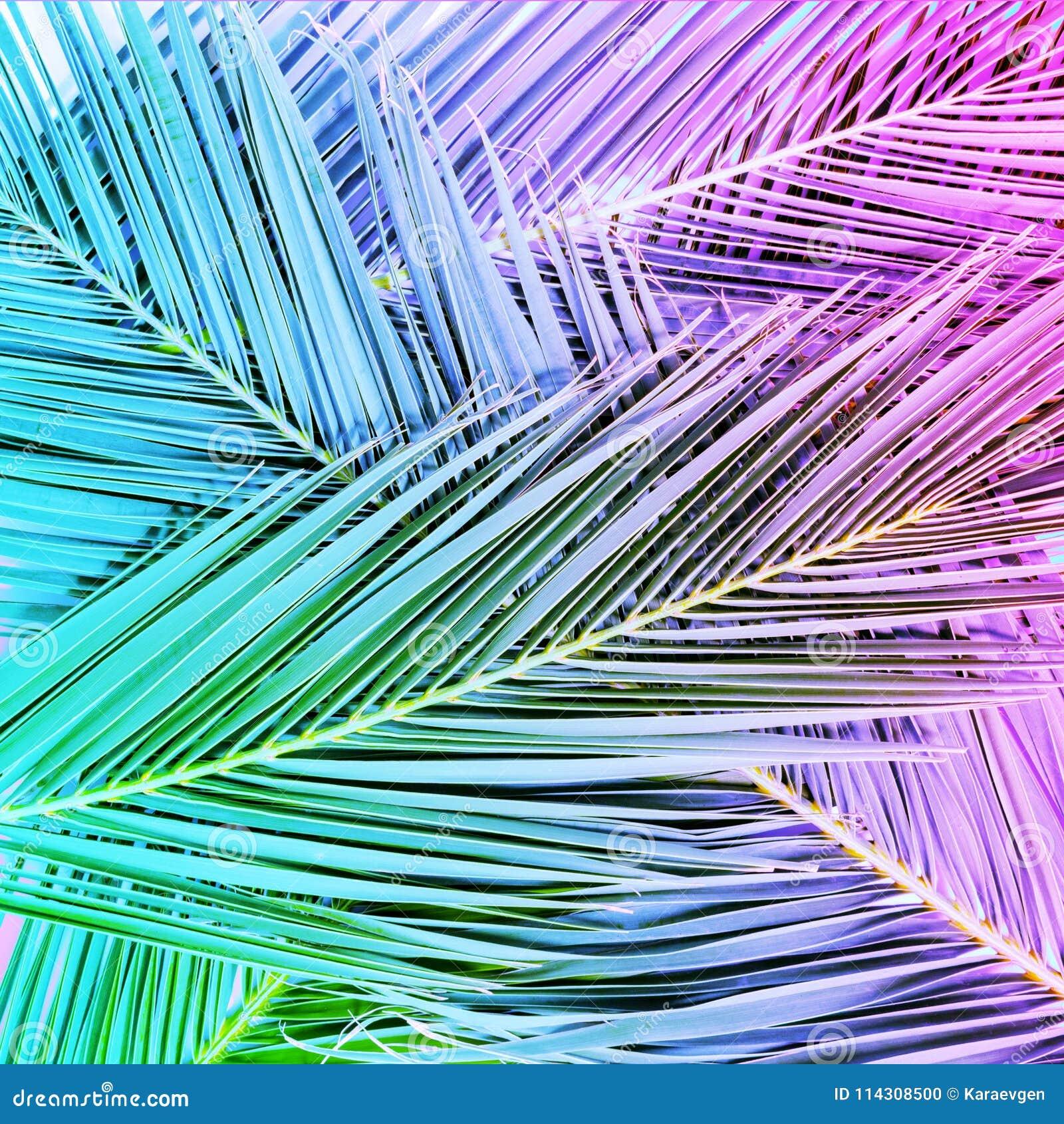Foglie di palma tropicali nei colori vibranti del neon di pendenza