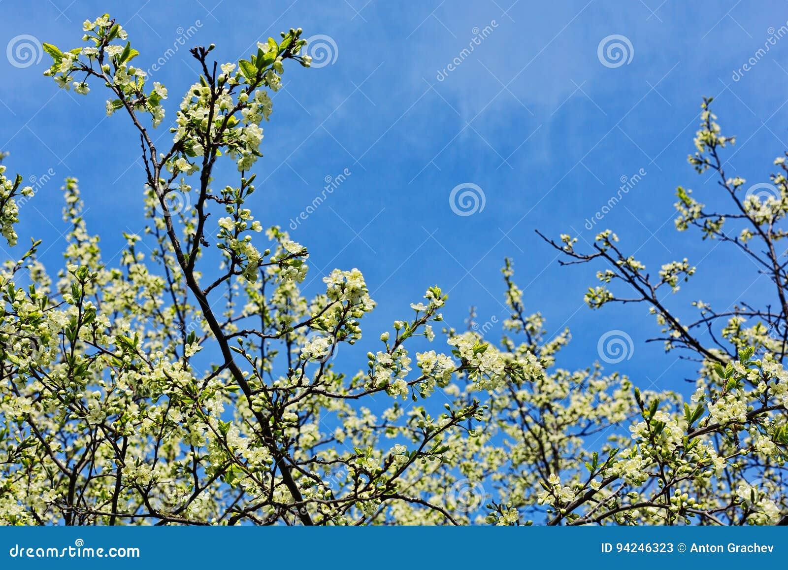 Foglie e fiori freschi in primavera