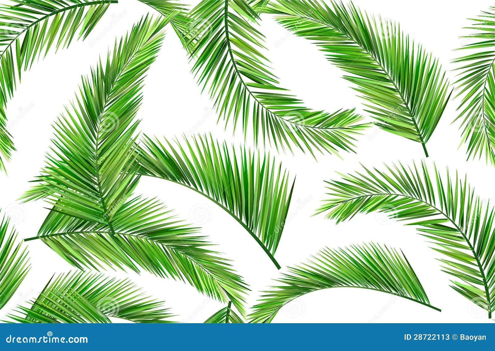 Foglie senza cuciture della noce di cocco illustrazione for Pianta di cocco