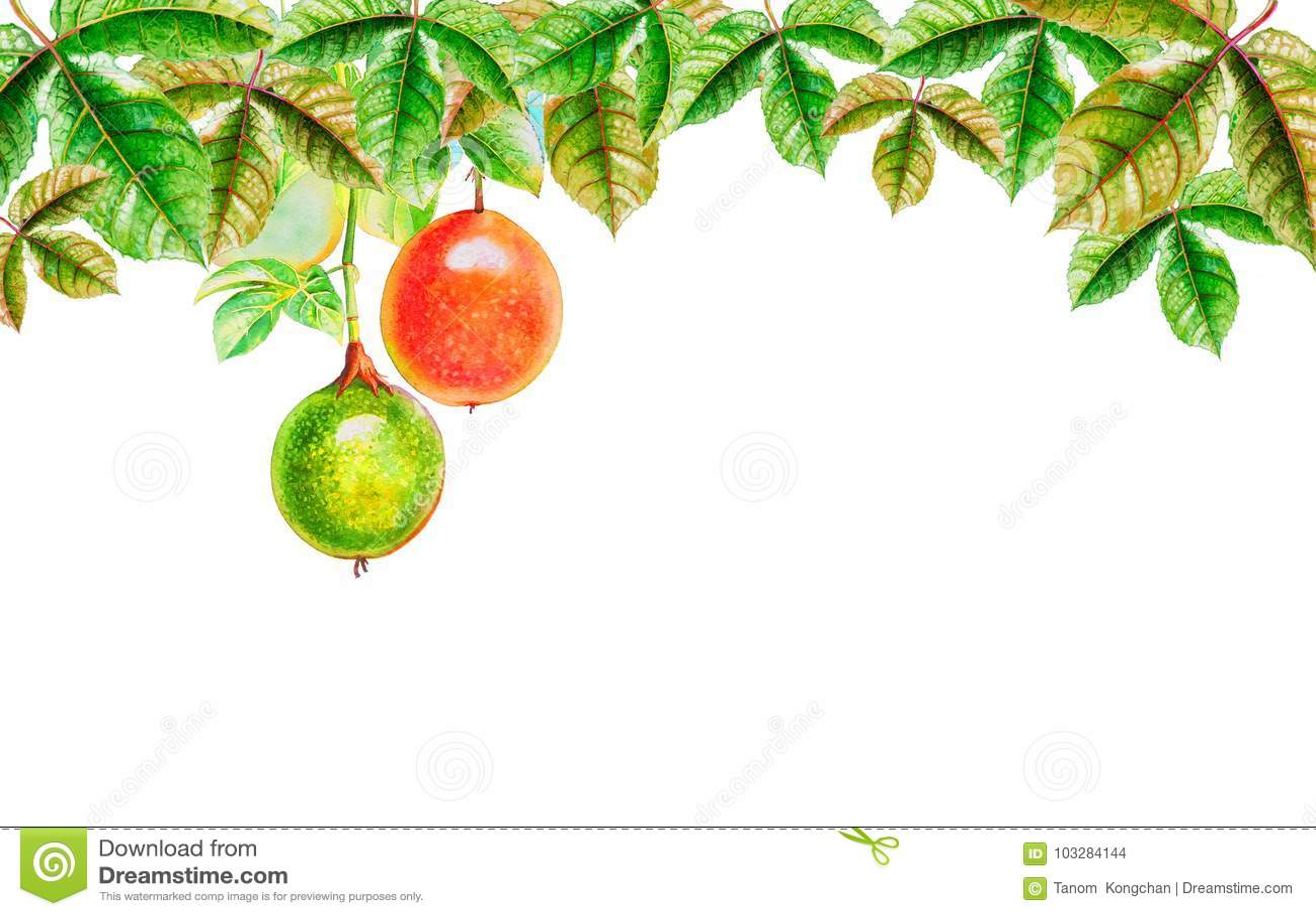 Foglie tropicali dell acquerello della pittura di frutto della passione