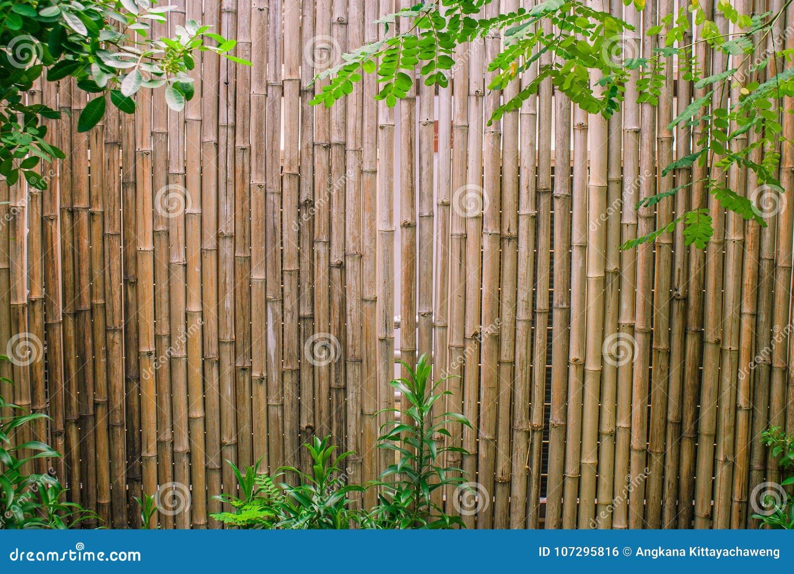 Foglie verdi con il fondo di bambù della parete per la decorazione del giardino