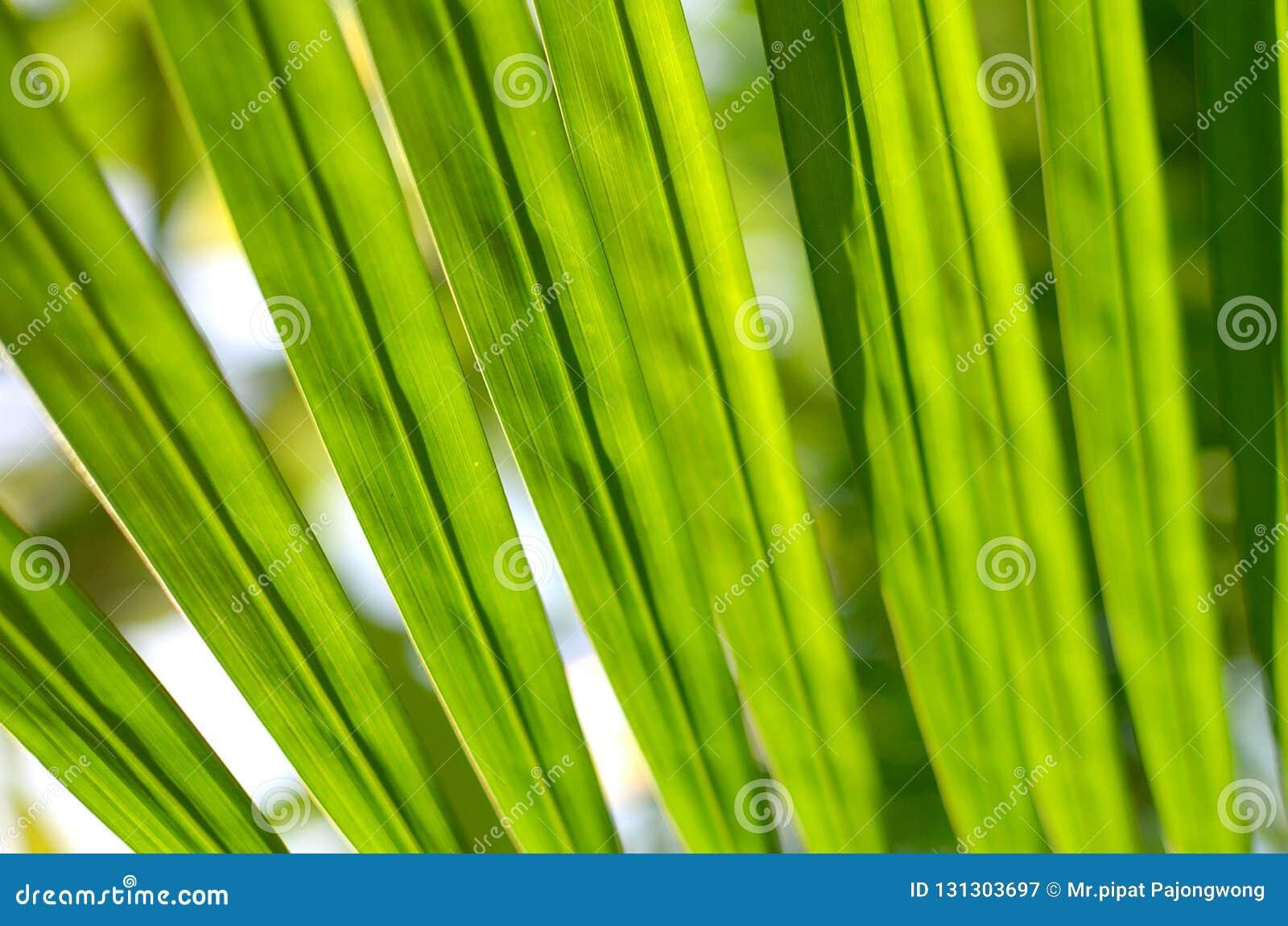 Foglie verdi su sole, fondo astratto del bokeh