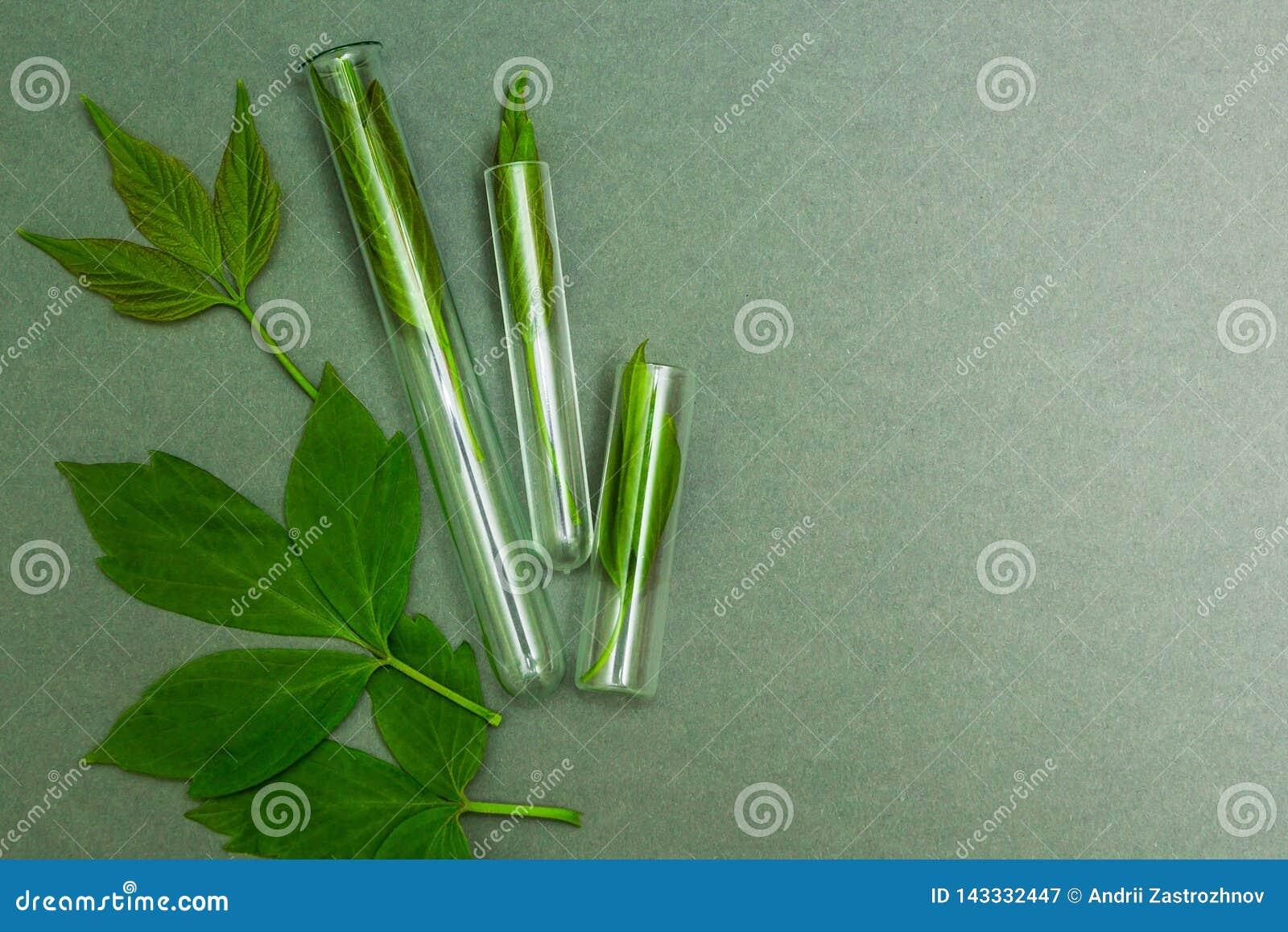 Foglie verdi in tubi, vista superiore Omeopatia, spazio per testo