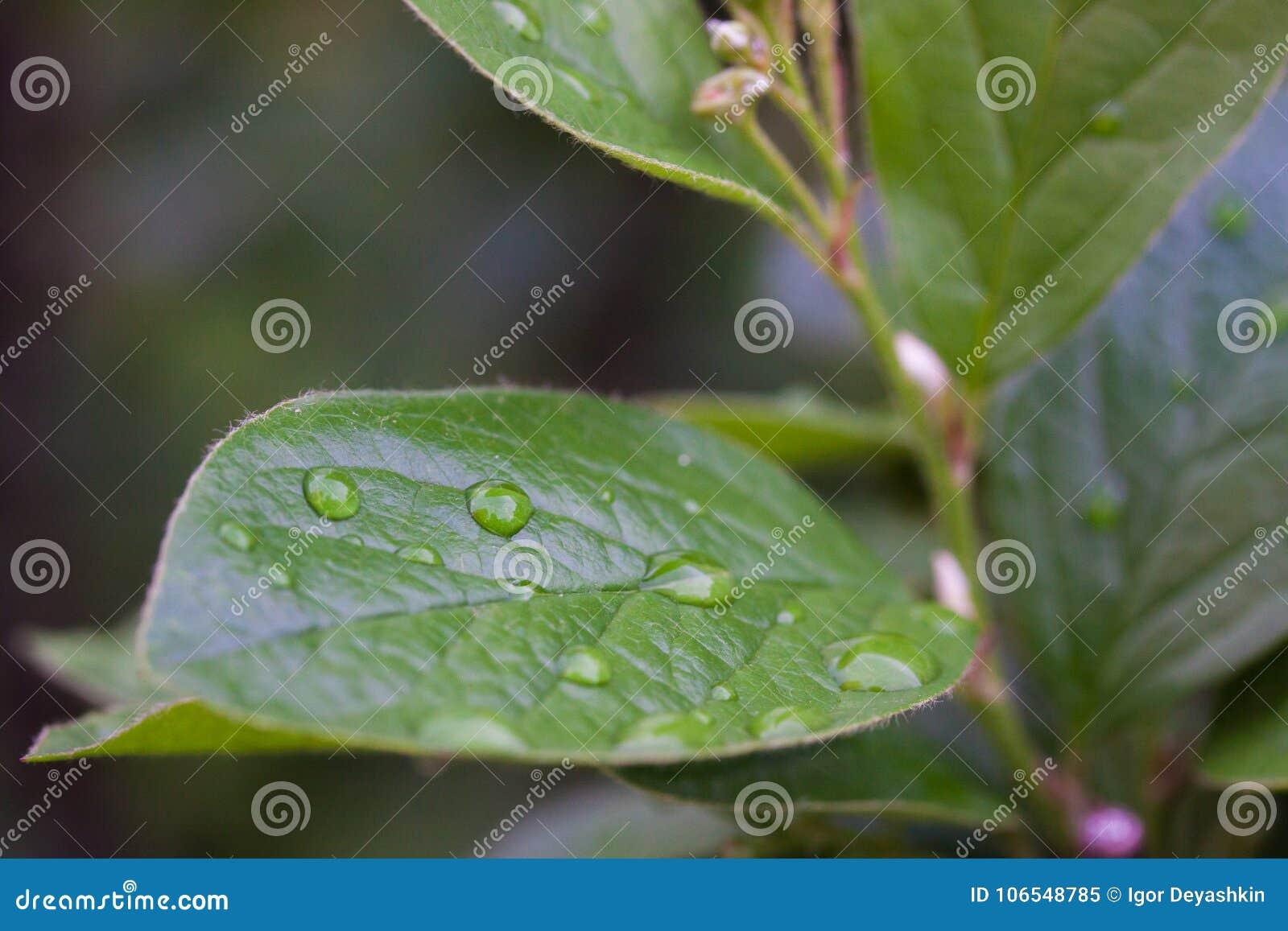 Foglio con le goccioline della pioggia