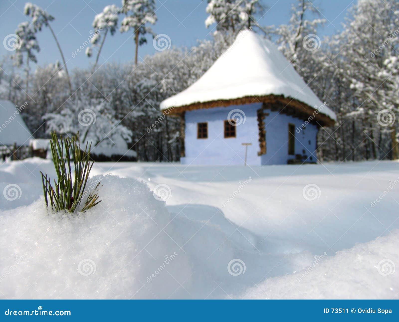 Foglio del pino in neve