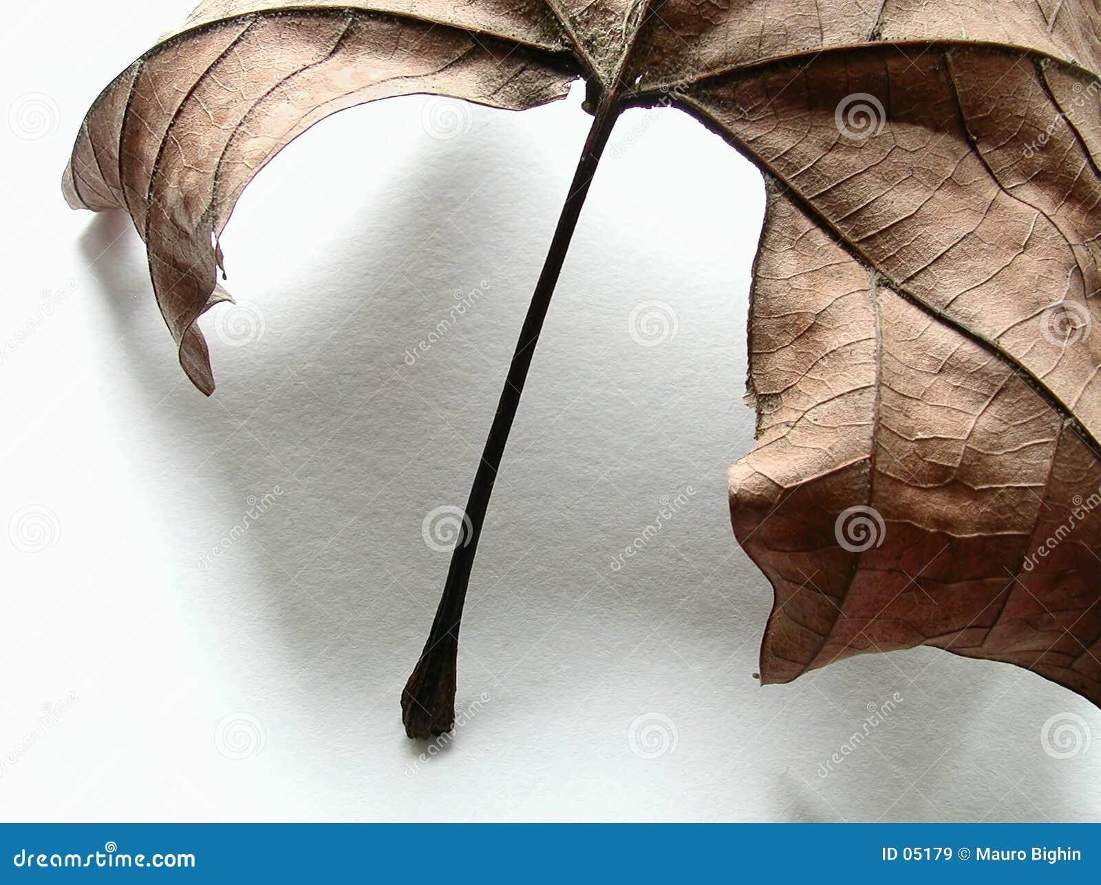 Foglio di autunno, particolare