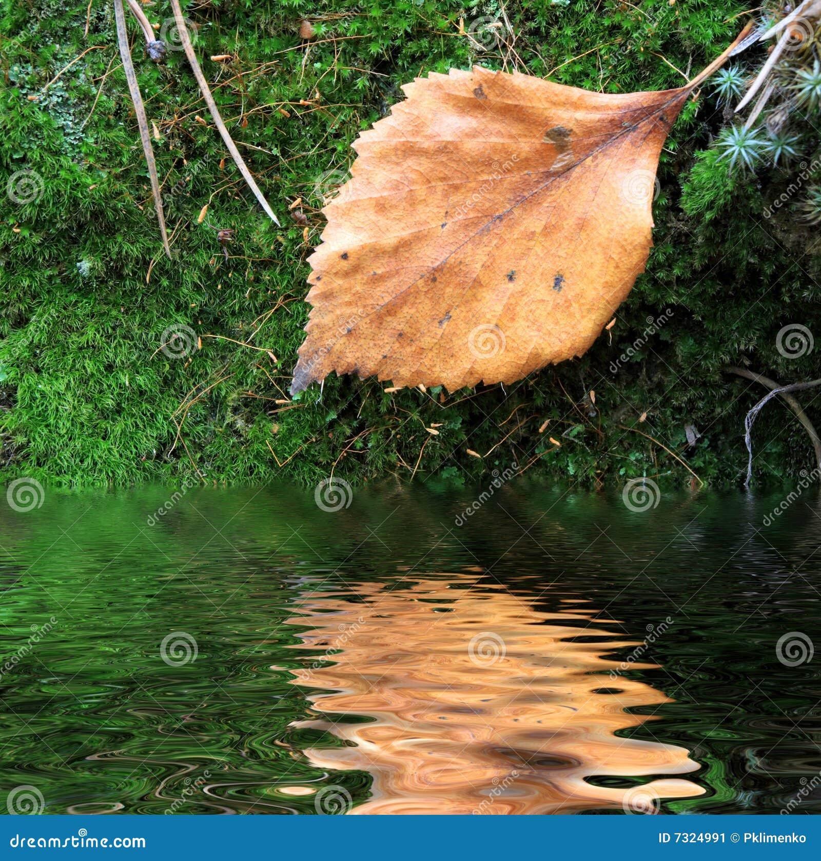 Foglio guasto su muschio verde vicino ad acqua
